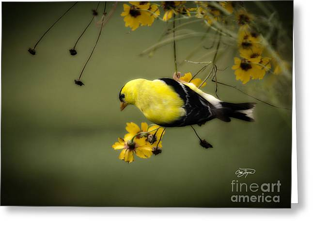 Hang On Greeting Card by Cris Hayes