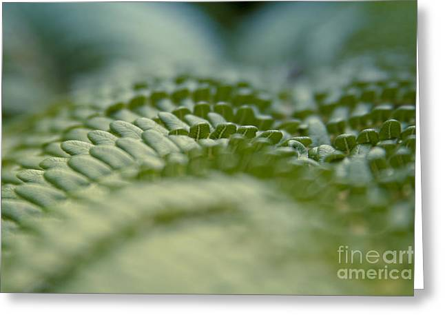 Hapuu II - Hawaiian Tree Fern - Cibotium Menziesii Greeting Card