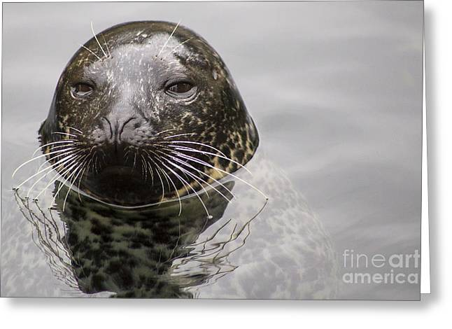 Harbor Seal Greeting Card by Twenty Two North Photography