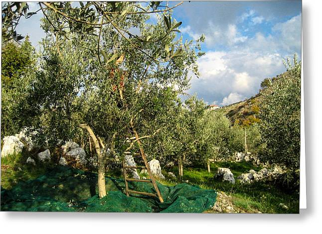 Greeting Card featuring the photograph Harvest Day by Dany Lison