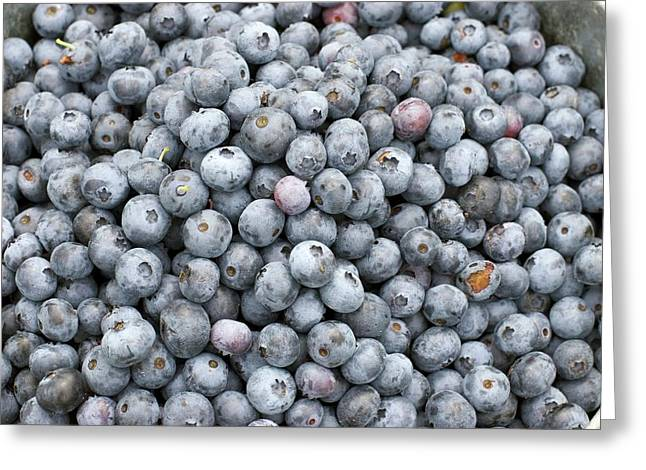 Harvested Blueberries Greeting Card