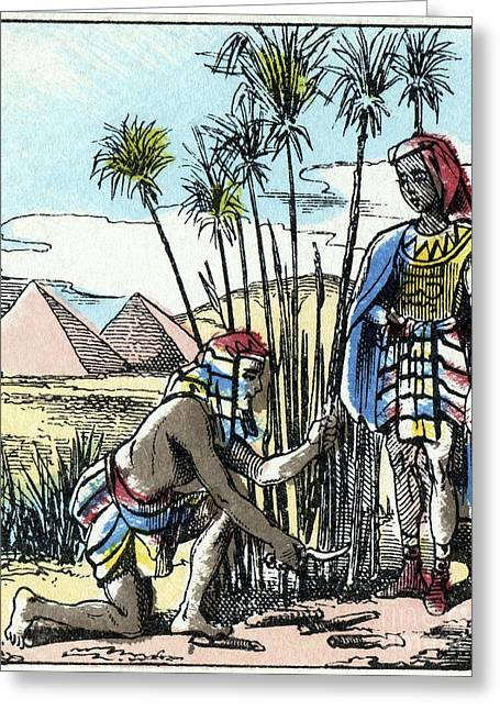 Harvesting Papyrus, Ancient Egypt Greeting Card by CCI Archives