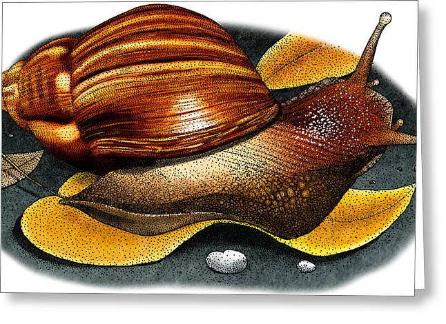 Hawaiian Tree Snail Greeting Card