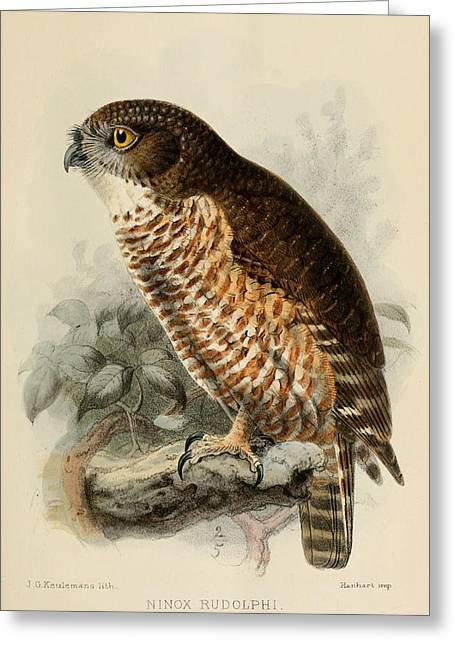 Hawk Owl Greeting Card by Rob Dreyer