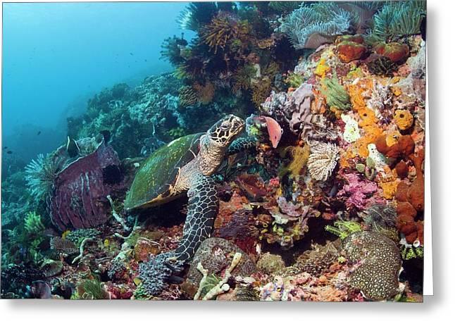 Hawksbill Sea Turtle Greeting Card by Georgette Douwma