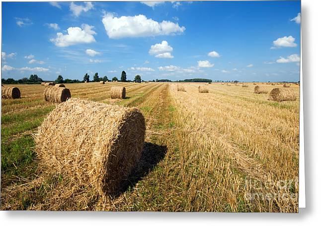 Haystacks In The Field Greeting Card by Michal Bednarek