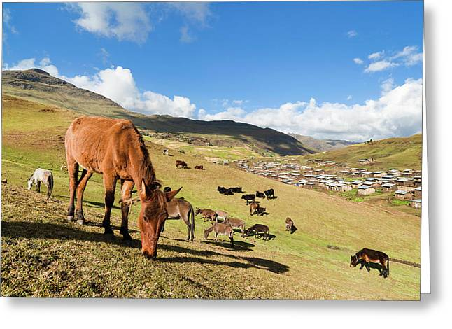 Herds Grazing Near The Village Greeting Card by Martin Zwick