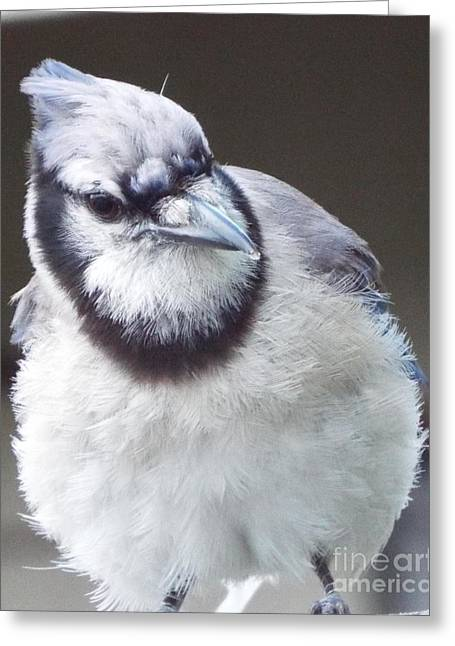 Here's Looking At You Greeting Card by Audrey Van Tassell
