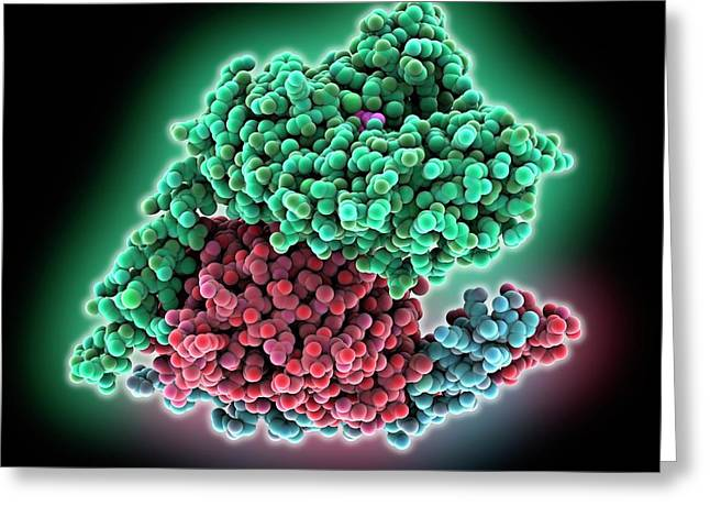 Heterotrimeric G Protein Complex Molecule Greeting Card by Laguna Design
