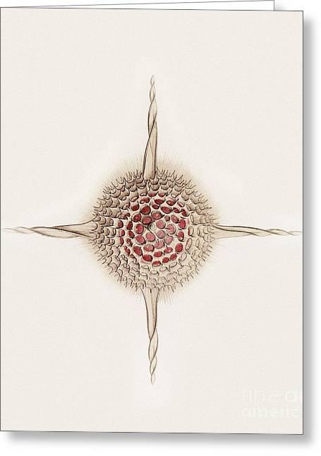 Hexastylus Radiolarian, Artwork Greeting Card