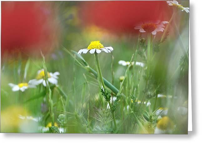 Hidden Flower Greeting Card by Guido Montanes Castillo