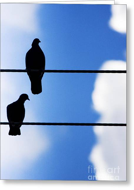 High On A Wire Greeting Card by Jorgo Photography - Wall Art Gallery