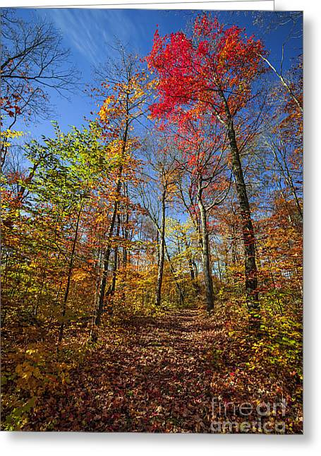 Hiking Trail In Fall Forest Greeting Card by Elena Elisseeva