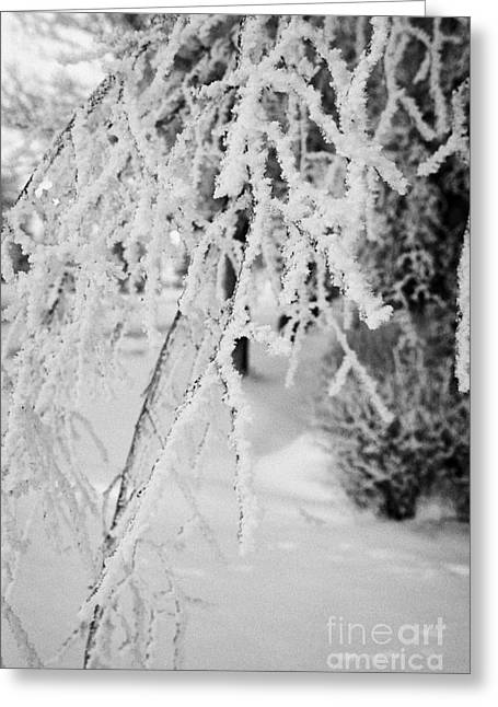 hoar frost on overhanging bare tree branches during winter Forget Saskatchewan Canada Greeting Card