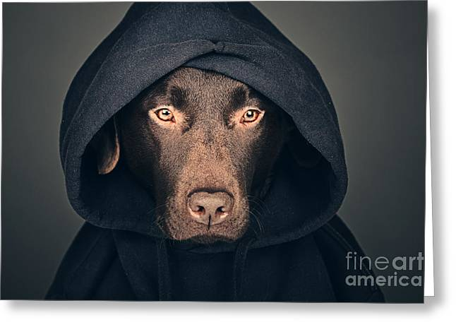 Hooded Dog Greeting Card by Justin Paget