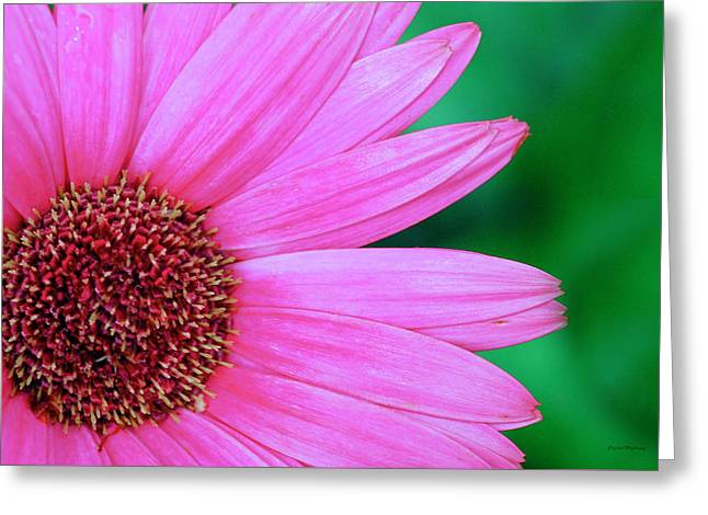 Pink Gerbera Flower Greeting Card