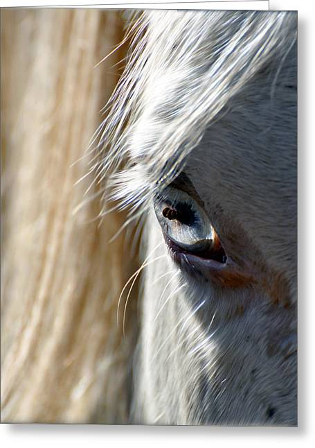 Horse Eye Greeting Card by Savannah Gibbs