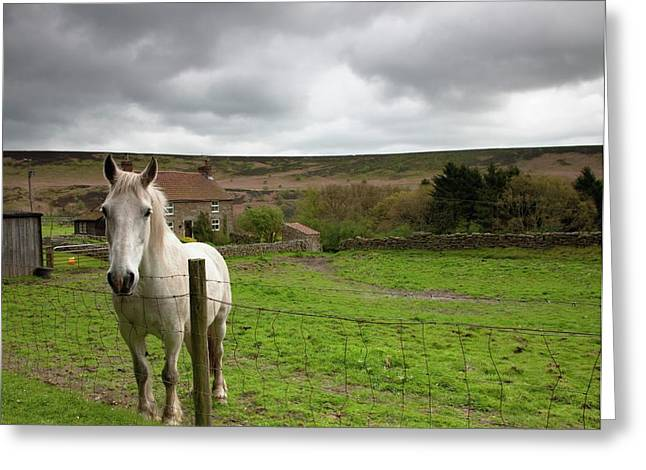 Horse Peering Over Fence, North Greeting Card