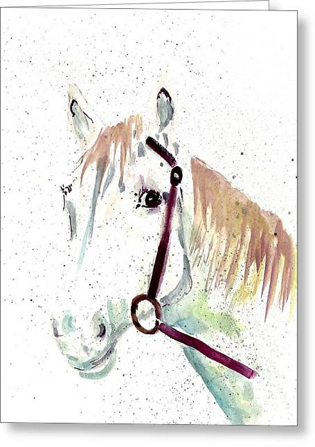 Horse Study Greeting Card by Steven Schultz