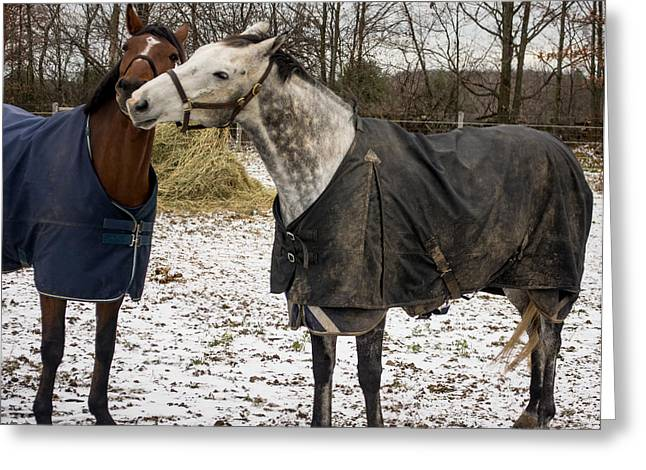 Horse Whispers Greeting Card