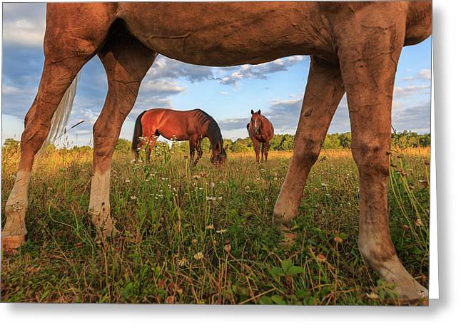 Horses Greeting Card by Everet Regal