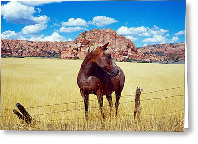 Horses Grazing In A Meadow, Kolob Greeting Card