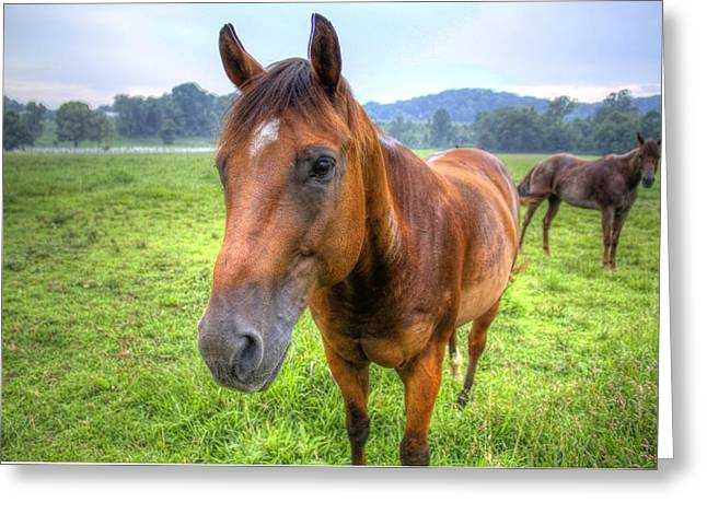 Horses In A Field Greeting Card by Jonny D