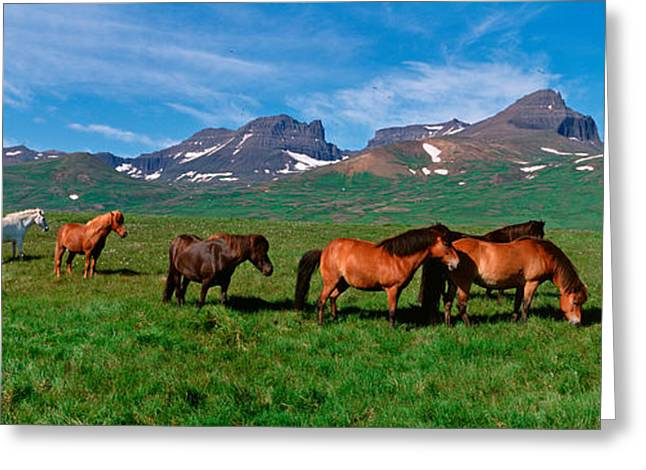 Horses Standing And Grazing In A Greeting Card by Panoramic Images