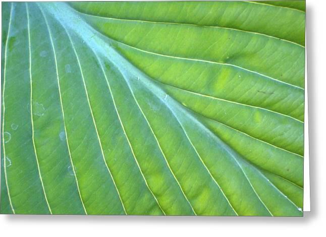 Hosta Leaf Close-up Greeting Card