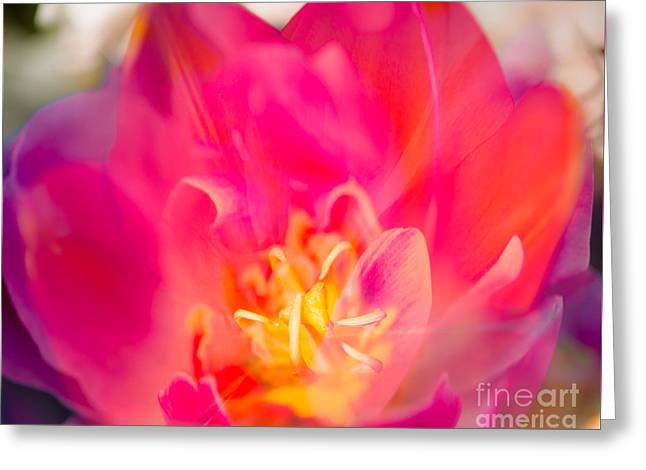 Hot Pink Bloom Greeting Card by Sonja Quintero