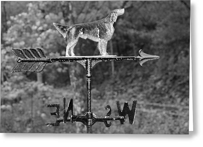 Hound Dog Weather Vane Greeting Card by Dan Sproul