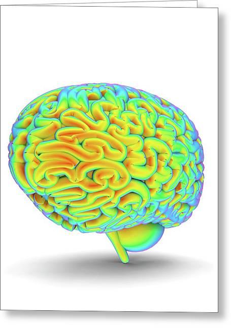 Human Brain Greeting Card by Alfred Pasieka
