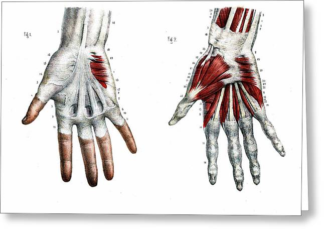 Human Hand Greeting Card by Collection Abecasis