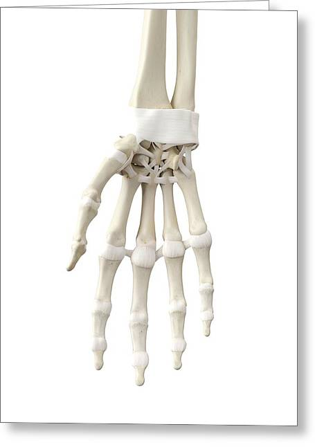 Human Hand Tendons Greeting Card by Sciepro