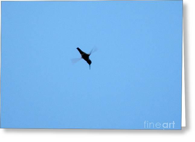 Humming Bird Greeting Card