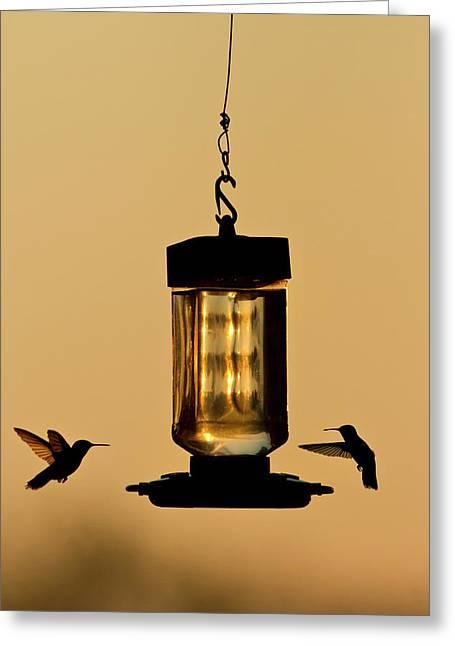 Hummingbirds At Feeder Before Sunrise Greeting Card