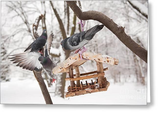 Three Hungry Pigeons Sitting On Bird Feeder  Greeting Card