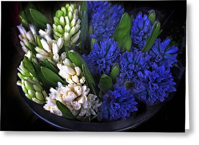 Hyacinth Greeting Card by Jessica Jenney
