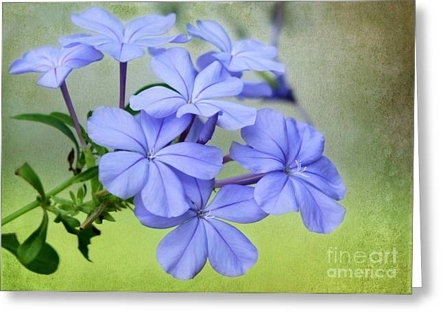 I Love Blue Flowers Greeting Card by Sabrina L Ryan