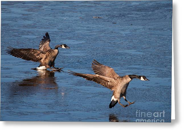 Greeting Card featuring the photograph Icy Landing by Dale Nelson