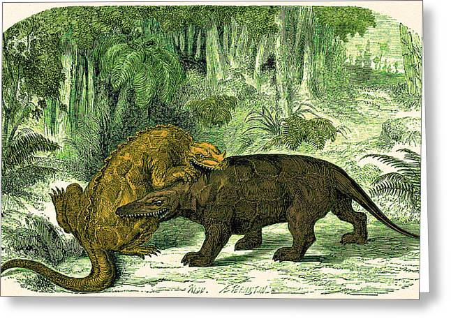 Iguanodon Biting Megalosaurus Greeting Card by Wellcome Images