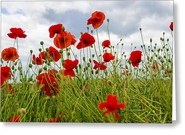 In Flanders Fields Greeting Card