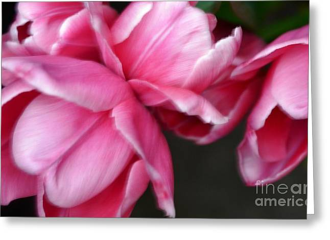 In The Pink Greeting Card by Kathleen Struckle