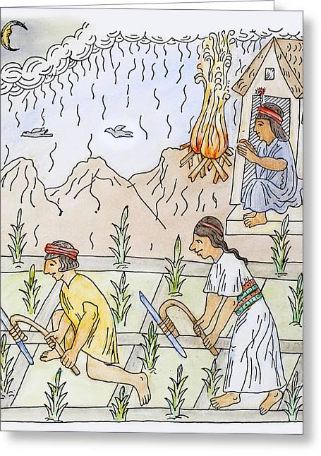 Incan Cultivation Greeting Card by Granger
