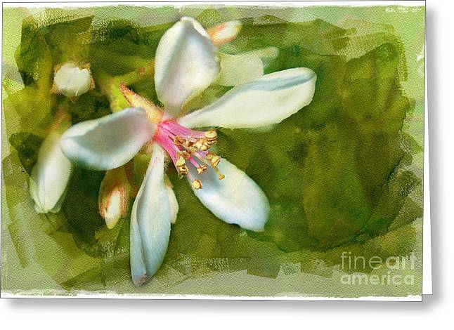 India Hawthorne Greeting Card