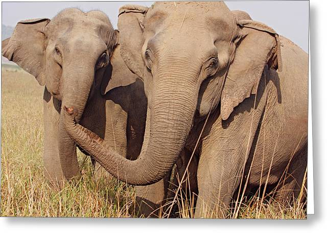 Indian Elephant Expressing Greeting Card by Jagdeep Rajput