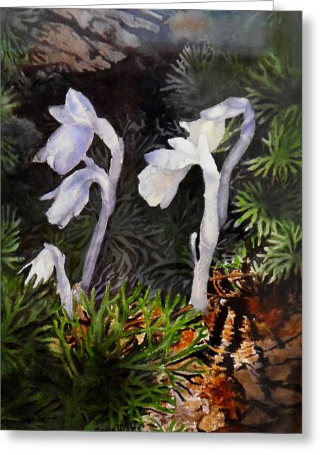 Indian Pipes Greeting Card by Enola McClincey