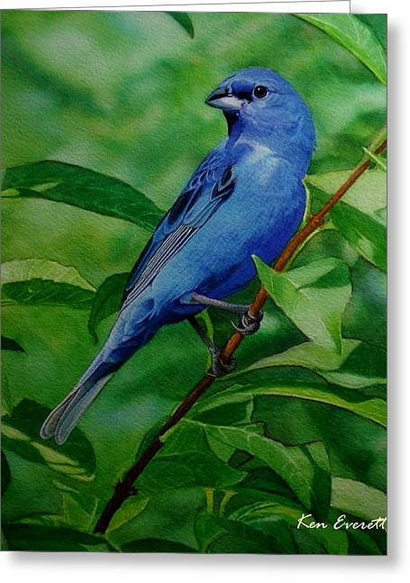 Indigo Bunting Greeting Card by Ken Everett