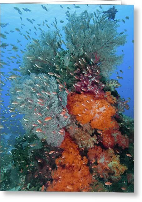 Indonesia, Komodo National Park, Fish Greeting Card by Jaynes Gallery