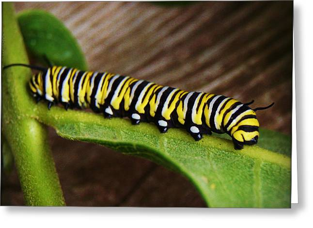 Insect Caterpillar Greeting Card